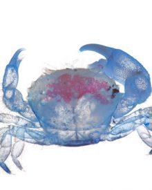 Iori Tomita: Animais marinhos de alma néon