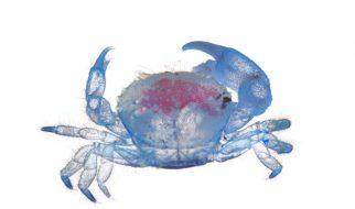 Iori Tomita: Animais marinhos de alma néon 3