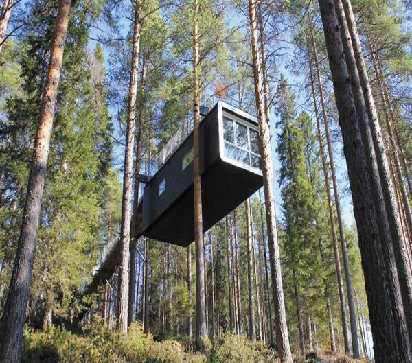 Um hotel nas árvores 5