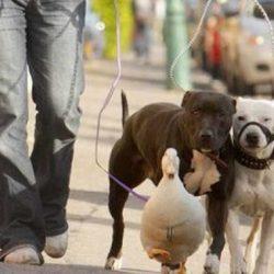Animais: amizade entre espécies 4