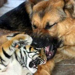 Animais: amizade entre espécies 5