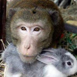 Animais: amizade entre espécies 7