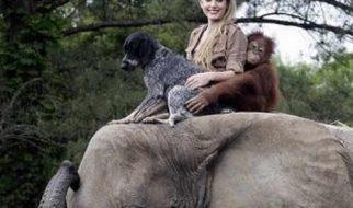 Animais: amizade entre espécies 2