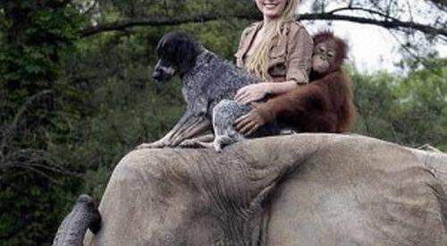 Animais: amizade entre espécies