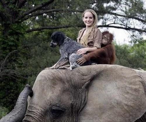Animais: amizade entre espécies 1