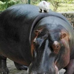 Animais: amizade entre espécies 9