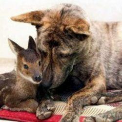 Animais: amizade entre espécies 11