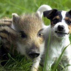 Animais: amizade entre espécies 12