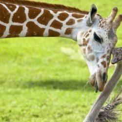 Animais: amizade entre espécies 15