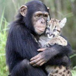 Animais: amizade entre espécies 16