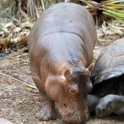 Animais: amizade entre espécies 17