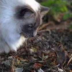 Animais: amizade entre espécies 18