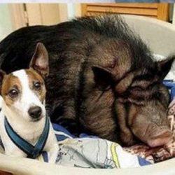 Animais: amizade entre espécies 20