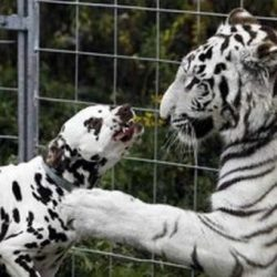 Animais: amizade entre espécies 21