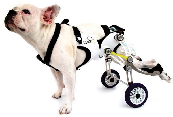 Amigo: a cadeira de rodas para cães 1