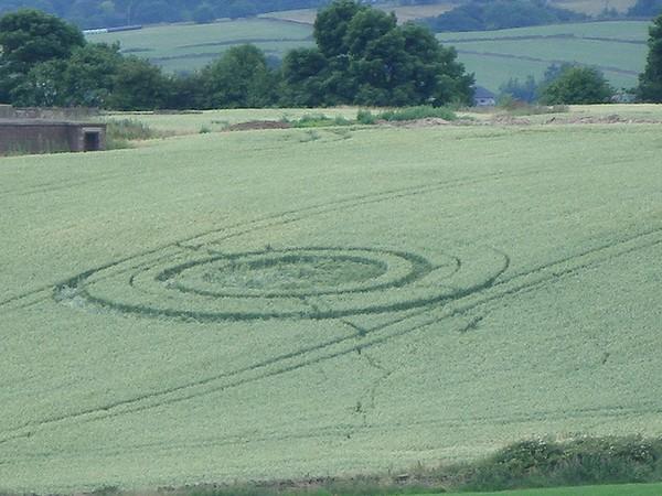 circulos na colheitas