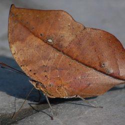 Fotos de camuflagens animais fascinantes 3