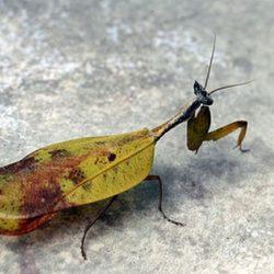 Fotos de camuflagens animais fascinantes 4