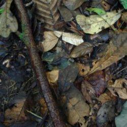 Fotos de camuflagens animais fascinantes 7