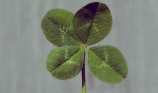 trevo de quatro folhas