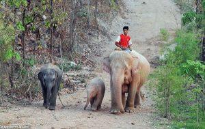 elefantes cor de rosa