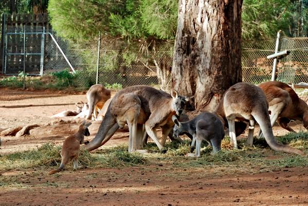 curiosidades dos animais