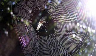 teias de aranha