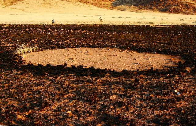 circulos no deserto