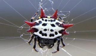 aranhas estranhas