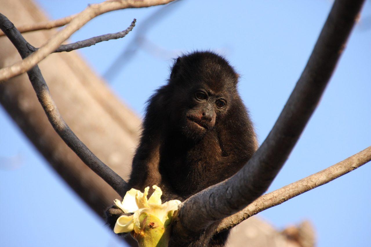 como descascar uma banana