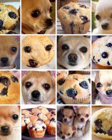 comida para cachorros
