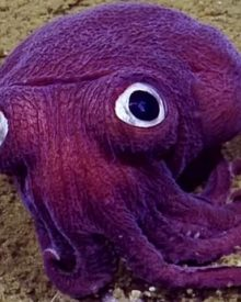 criatura marinha