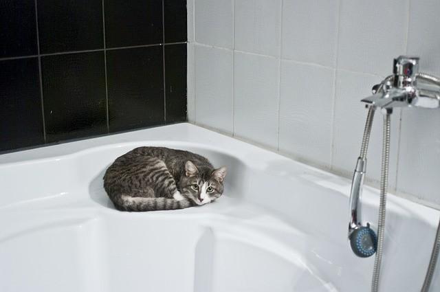 porque os gatos têm medo de água