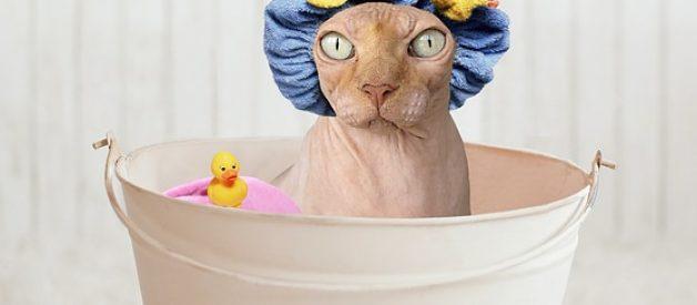 banho ao gato