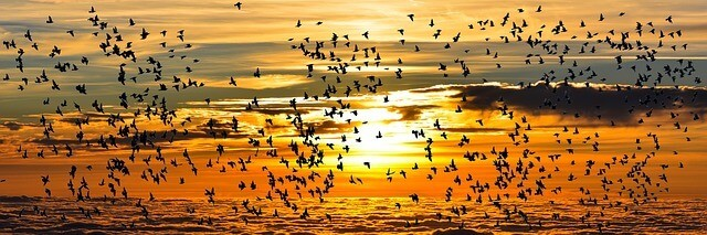 curiosidades das aves