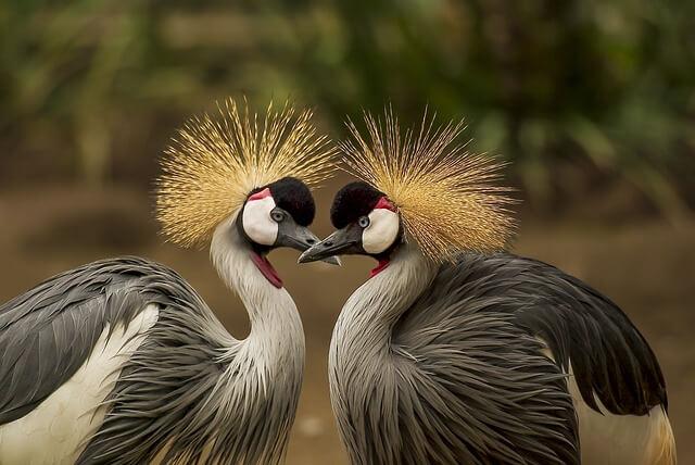 curiosidades sobre as aves