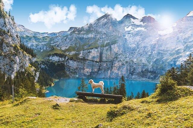 curiosidades sobre a suiça