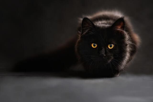 Adoptar um Gato Preto