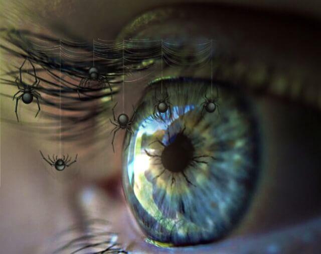 Sonhar com Aranha | Significado e Interpretações Mais Comuns 1