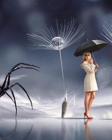 Sonhar com Aranha | Significado e Interpretações Mais Comuns