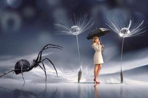 Sonhar com Aranha | Significado e Interpretações Mais Comuns 11