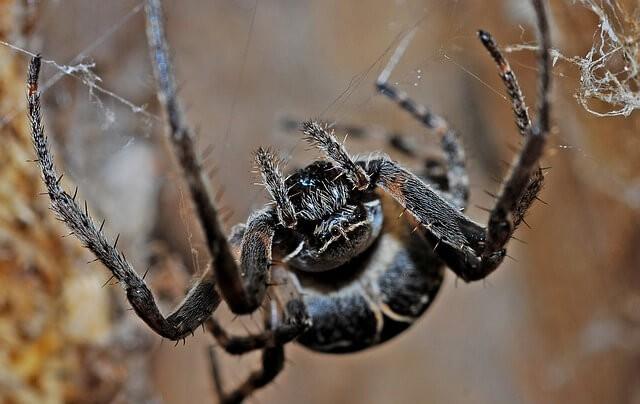 sonhar com aranhas