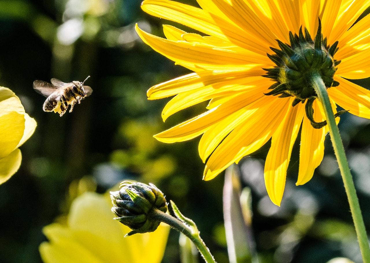 significado espiritual das abelhas