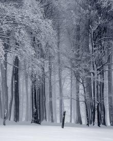 Sonhar com neve | Sentidos e interpretações mais comuns