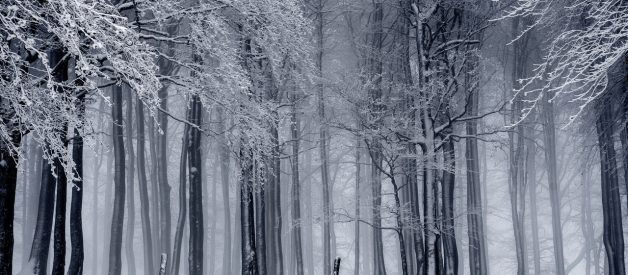 Sonhar com neve | Sentidos e interpretações mais comuns 1