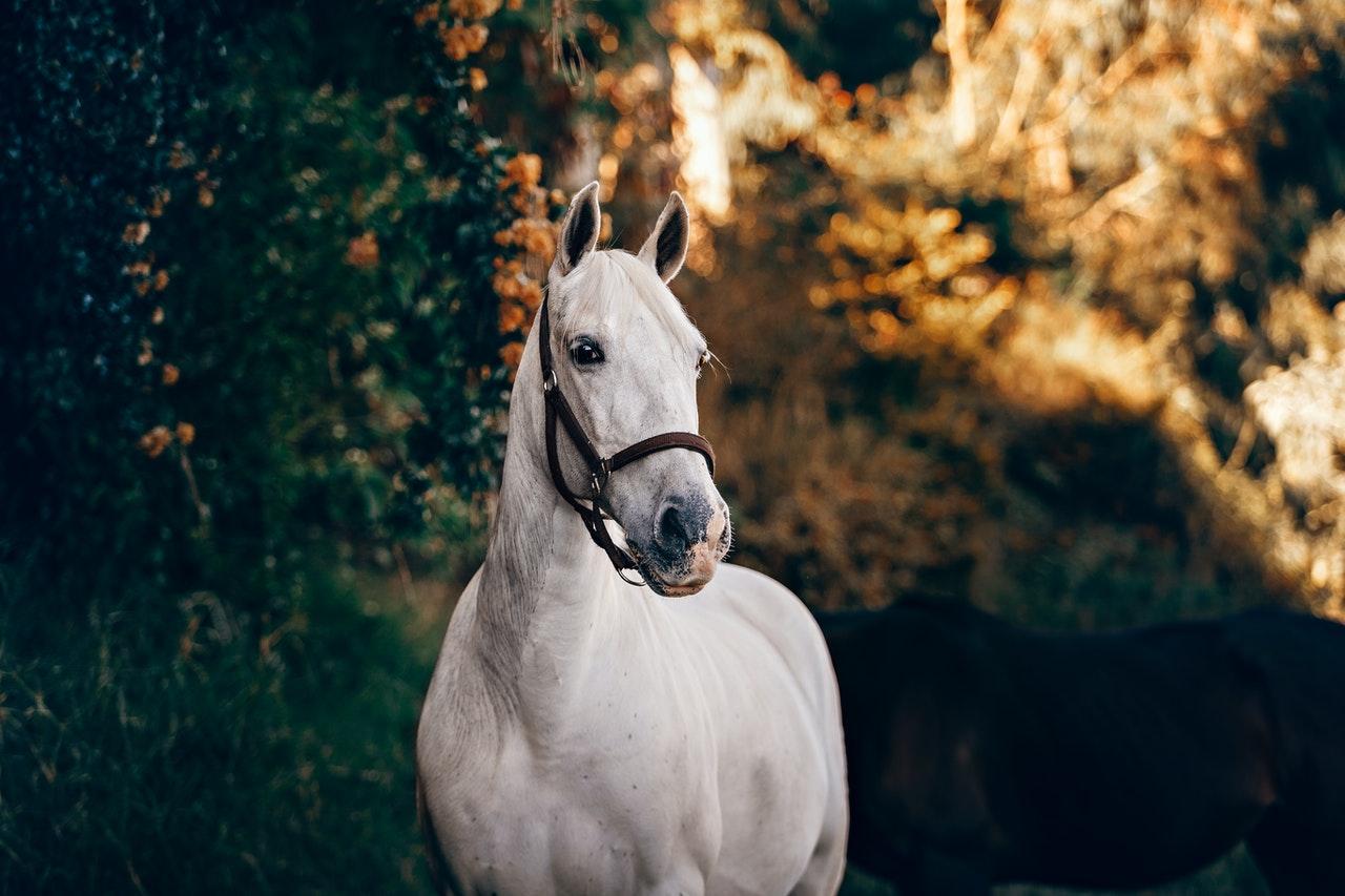sonhar com cavalos